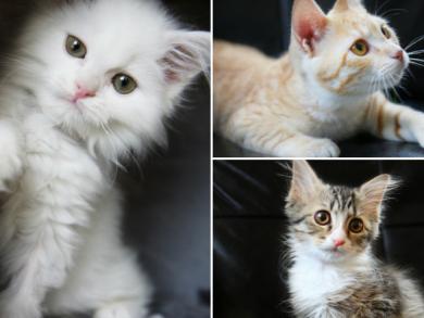 Adopt a cat in Doha
