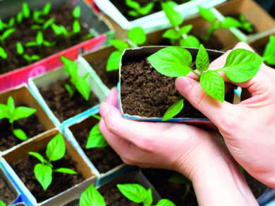 How to grow your own herbs and vegetables in Doha