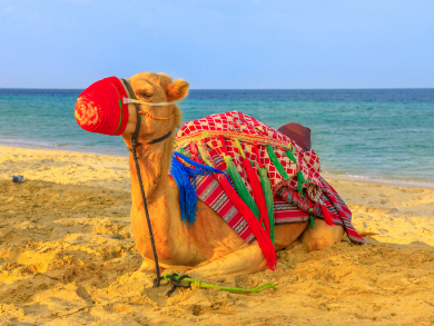Dreamy pictures of Doha's desert