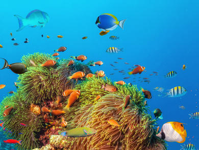 You can explore the Great Barrier Reef with David Attenborough