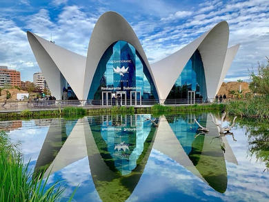 You can explore Europe's largest aquarium from home in Qatar