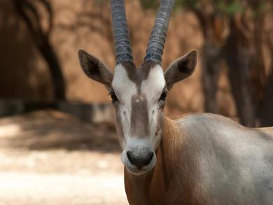 Qatar's Al Shuaa Nature Reserve reopens