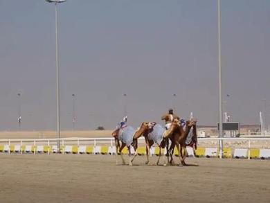 Qatar's Al-Shahaniya joins UNESCO Global Network of Learning Cities